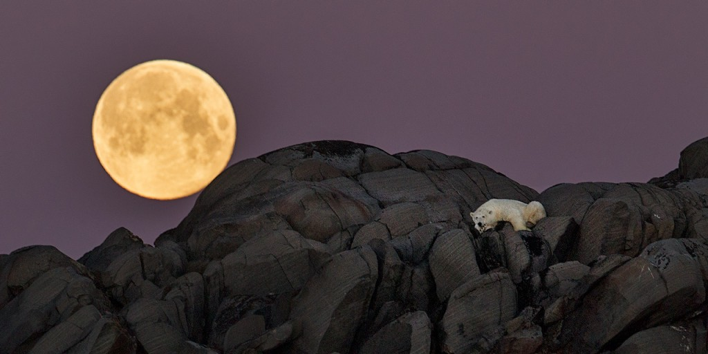 3 Polar-bear-full-moon-1