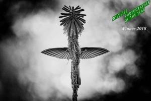 Website-cover-page_9920-BW-copyrightJanvanderGreef